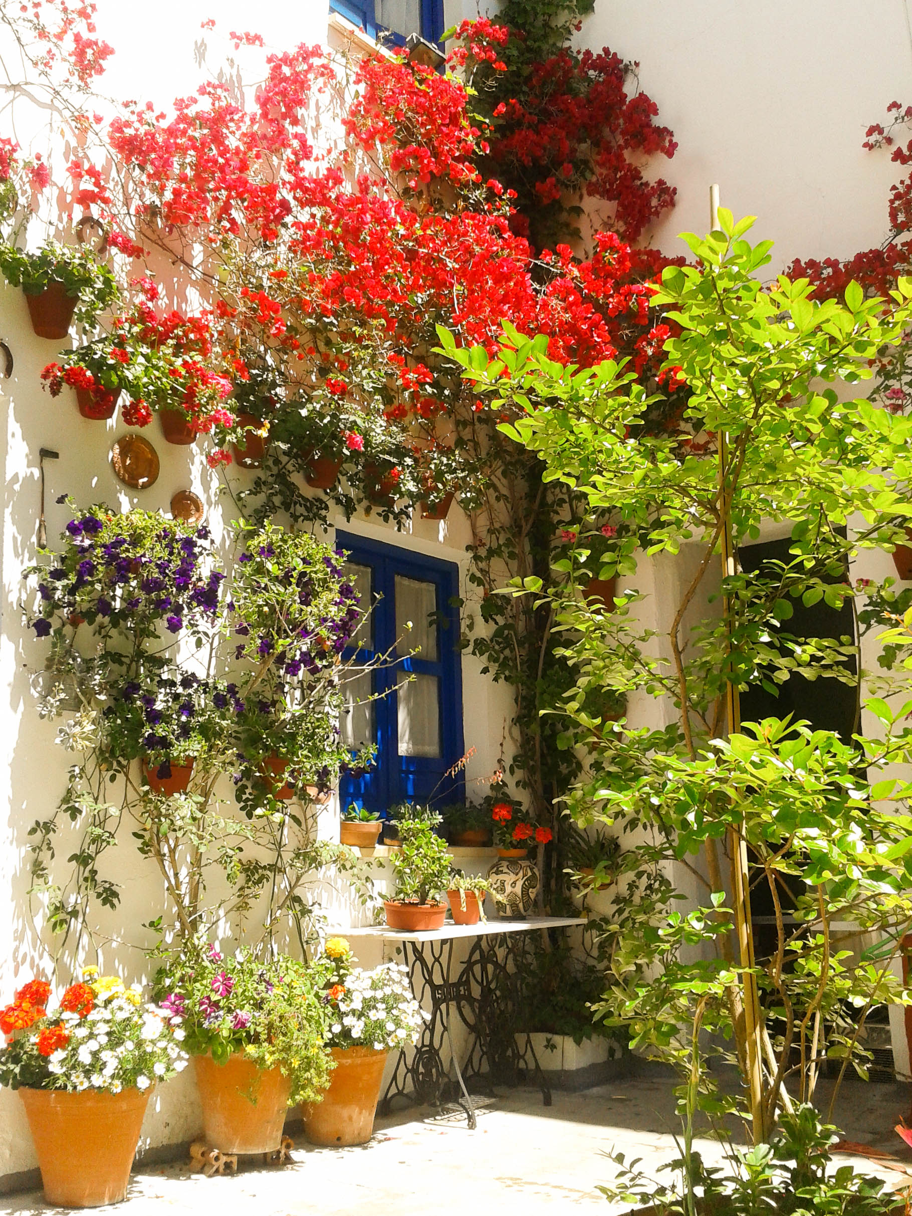 flores-patios-cordoba-mayo-3