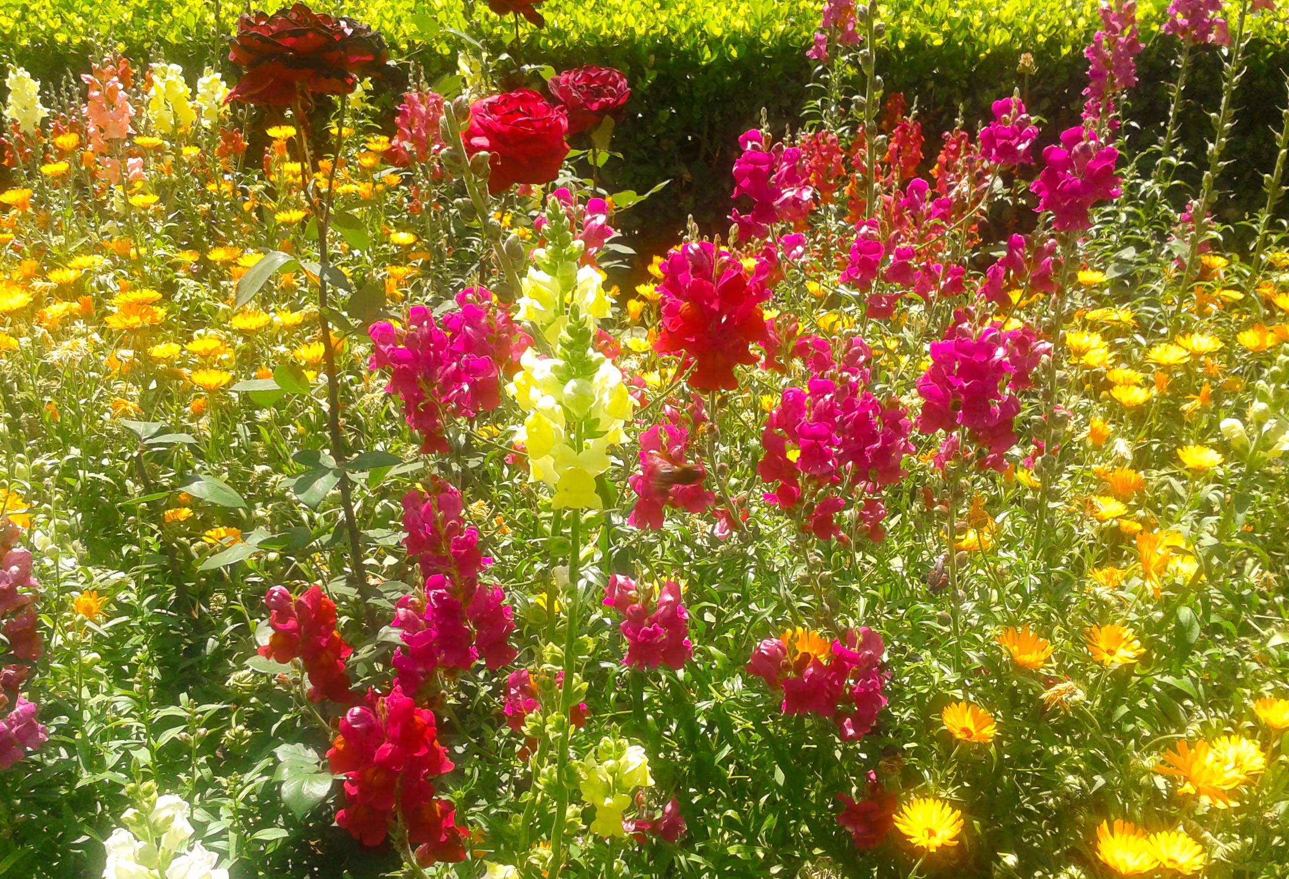 flores-patios-cordoba