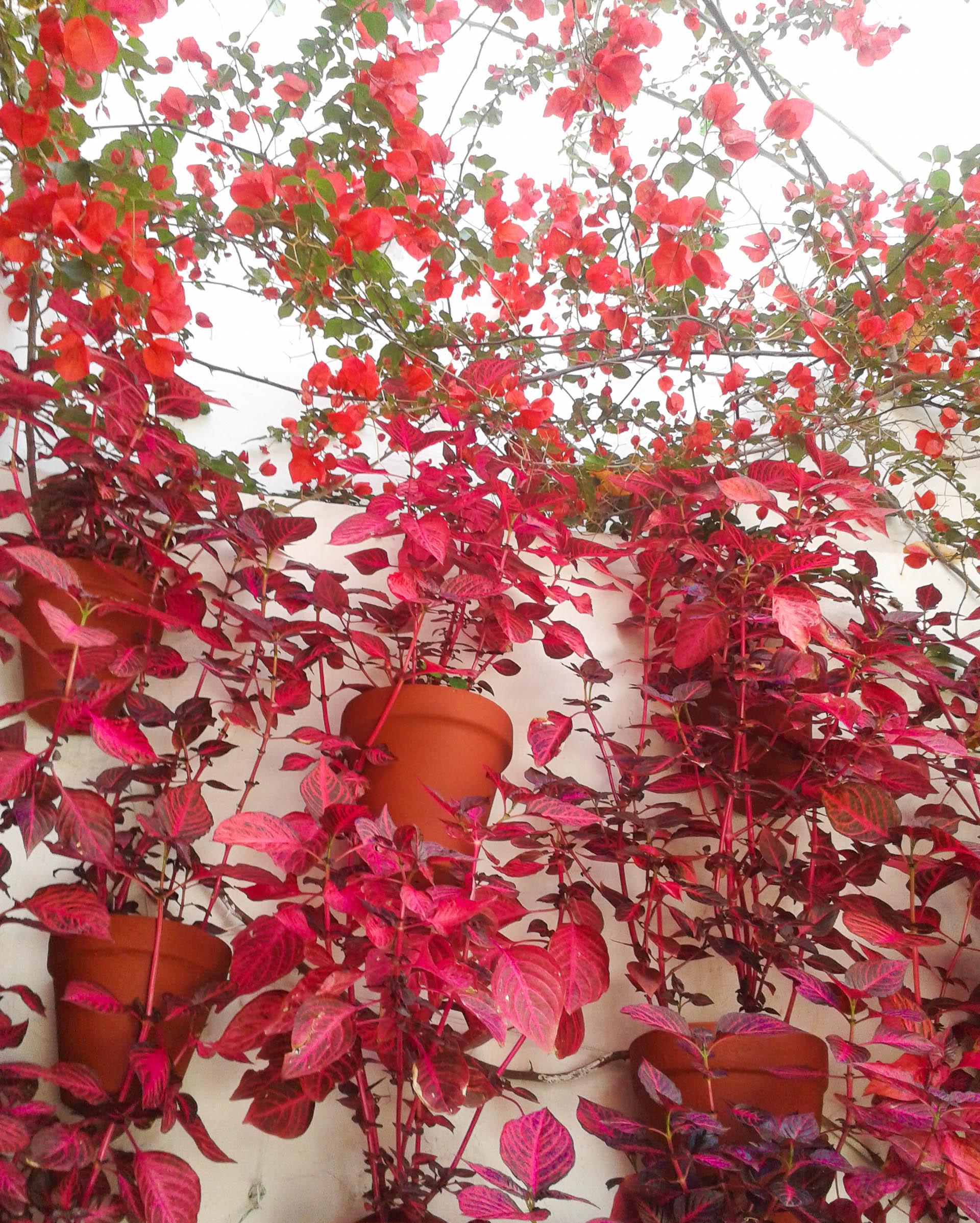vegetacion-patios-cordoba