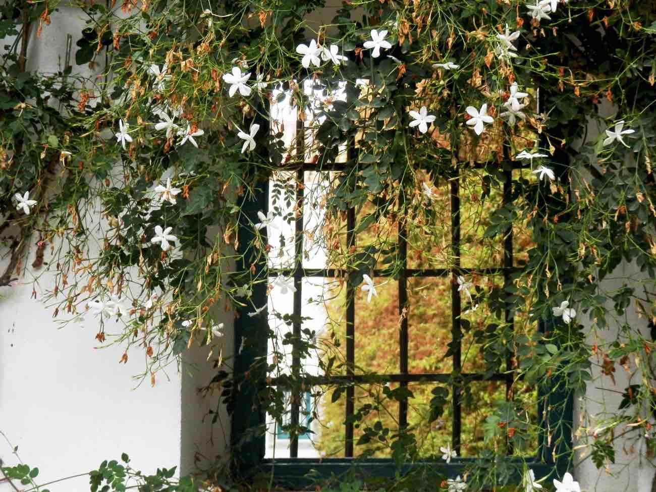 berja con flores palacio de viana cordoba