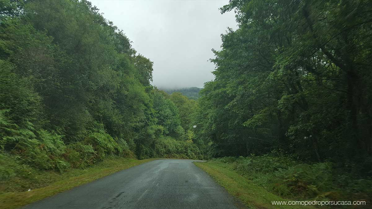 carretera-norte-navarra-vegetacion-verde
