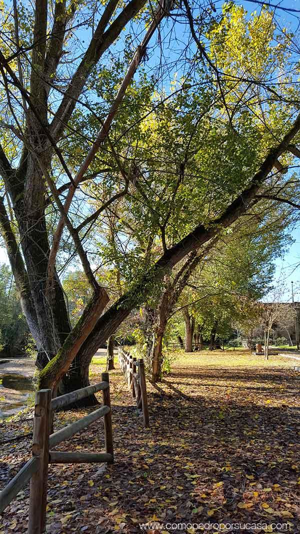 hojas arboles rio alberch escalona
