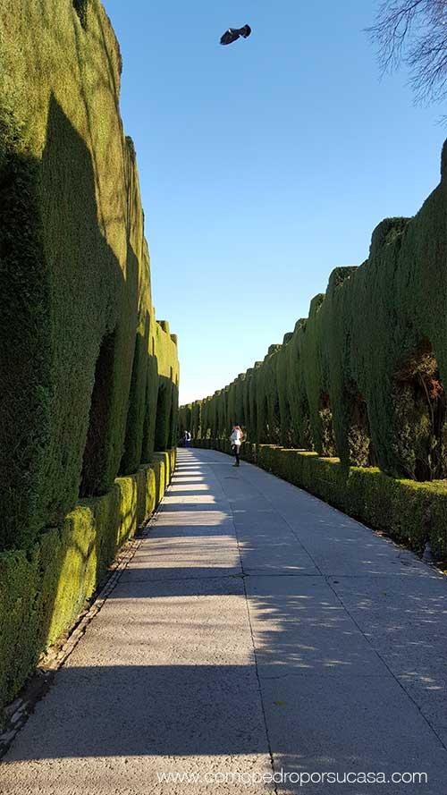 paseos-por-la-alhambra-granada